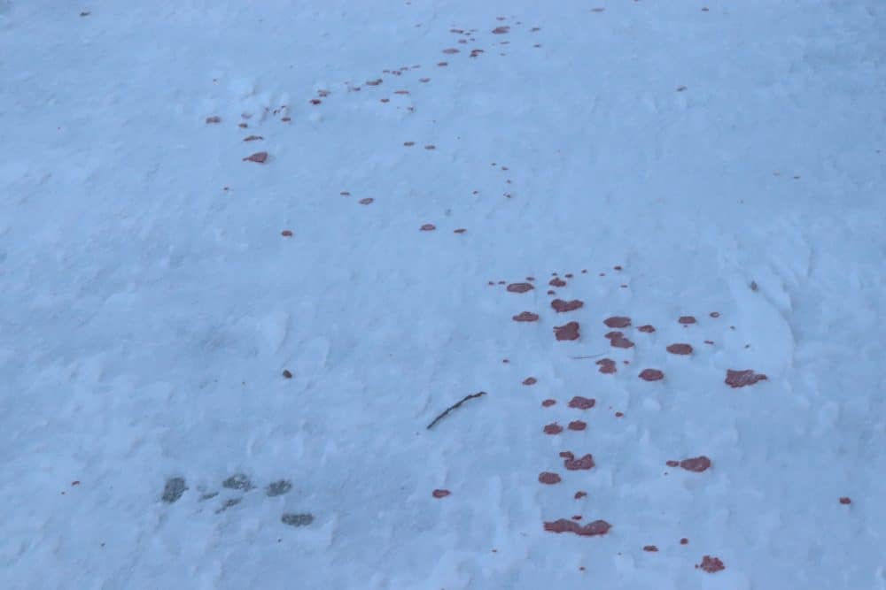 A trail of blood is seen on the sidewalk of Gitzel Street on Monday afternoon. Dylan Shor