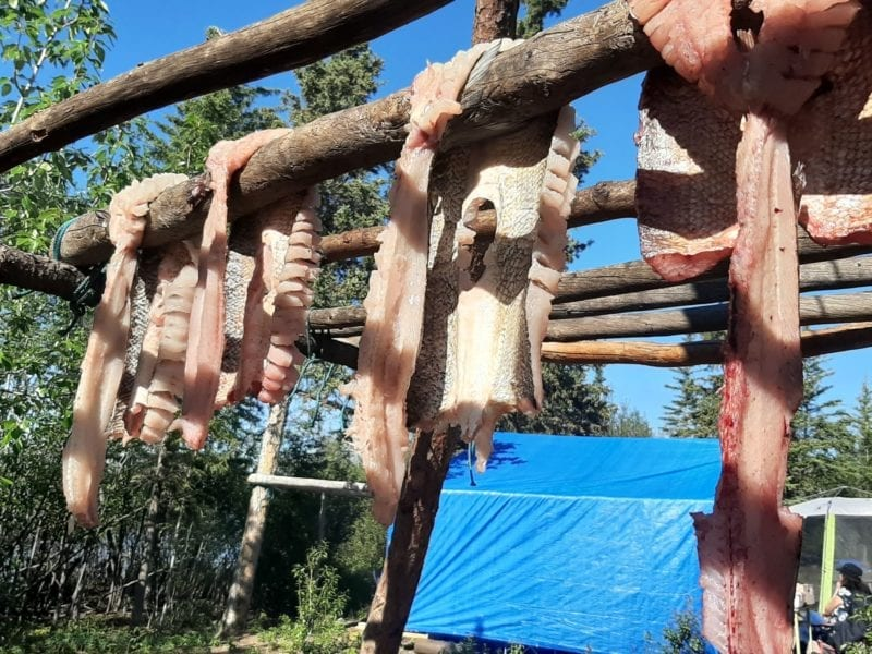 Whitefish is hung up to dry at a fish camp organized by Rivers East Arm Tours. James Marlowe photo